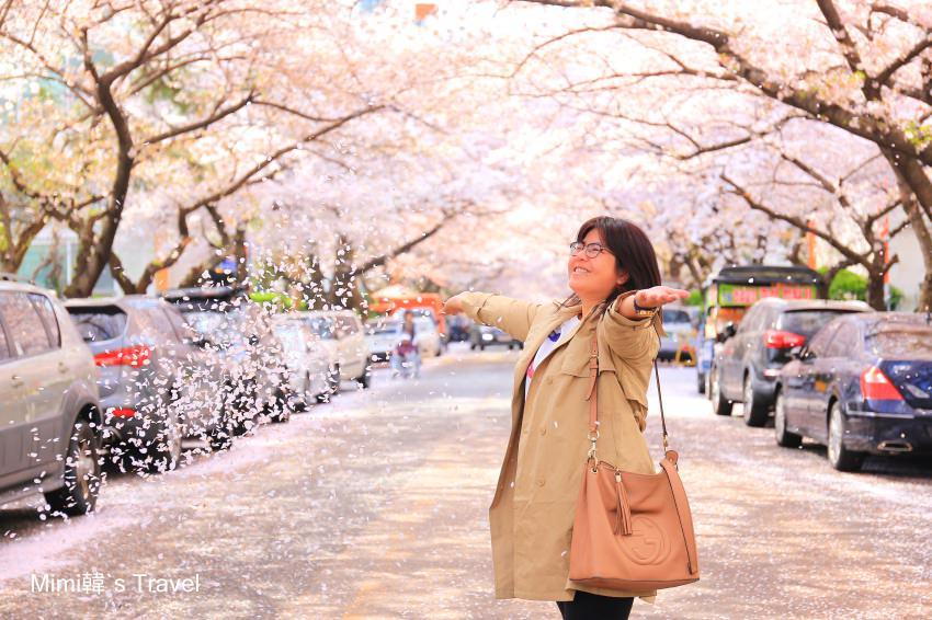 【釜山賞櫻】南川洞櫻花路:廣安里海水浴場,金蓮山站走路10分鐘,超密集櫻花美景