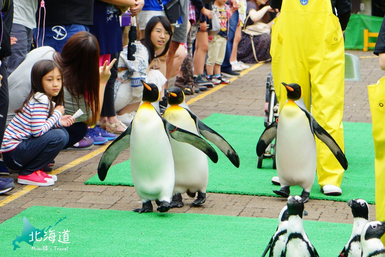 【北海道景點】登別尼克斯海洋公園:必看企鵝遊行、海豚海獅表演