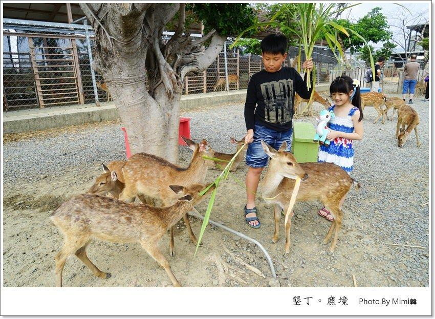 【墾丁景點】鹿境梅花鹿生態園區:不用衝奈良,在台灣就能被小鹿斑比包圍啦!梅花鹿就是萌萌der