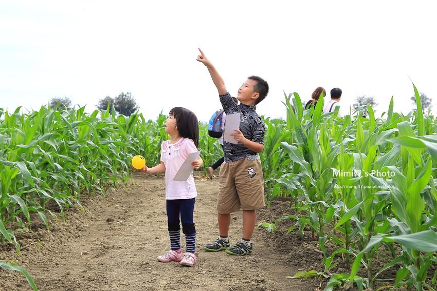 義竹玉米文化季32.JPG