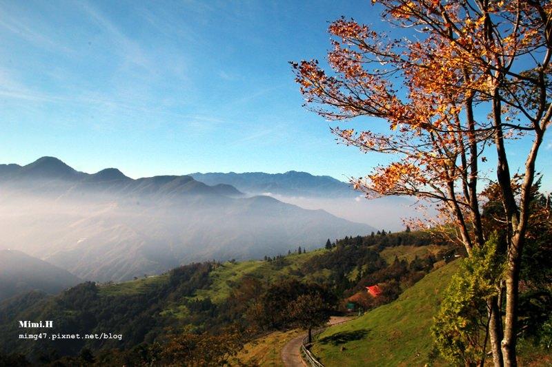 【南投.清境】與美景、羊兒們來次自然的邂逅吧~ 「畜牧步道」