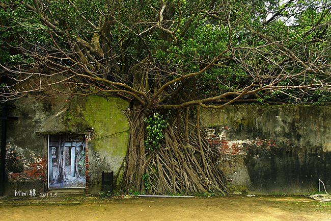 【台南景點】安平樹屋:來安平必遊,感受老榕樹的破壞、共生與堅韌的生命力~